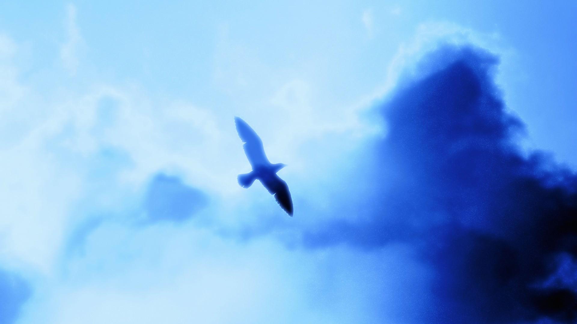 鳥の壁紙 1920 215 1080 7 スマホ・pc用壁紙 Wallpaper Box