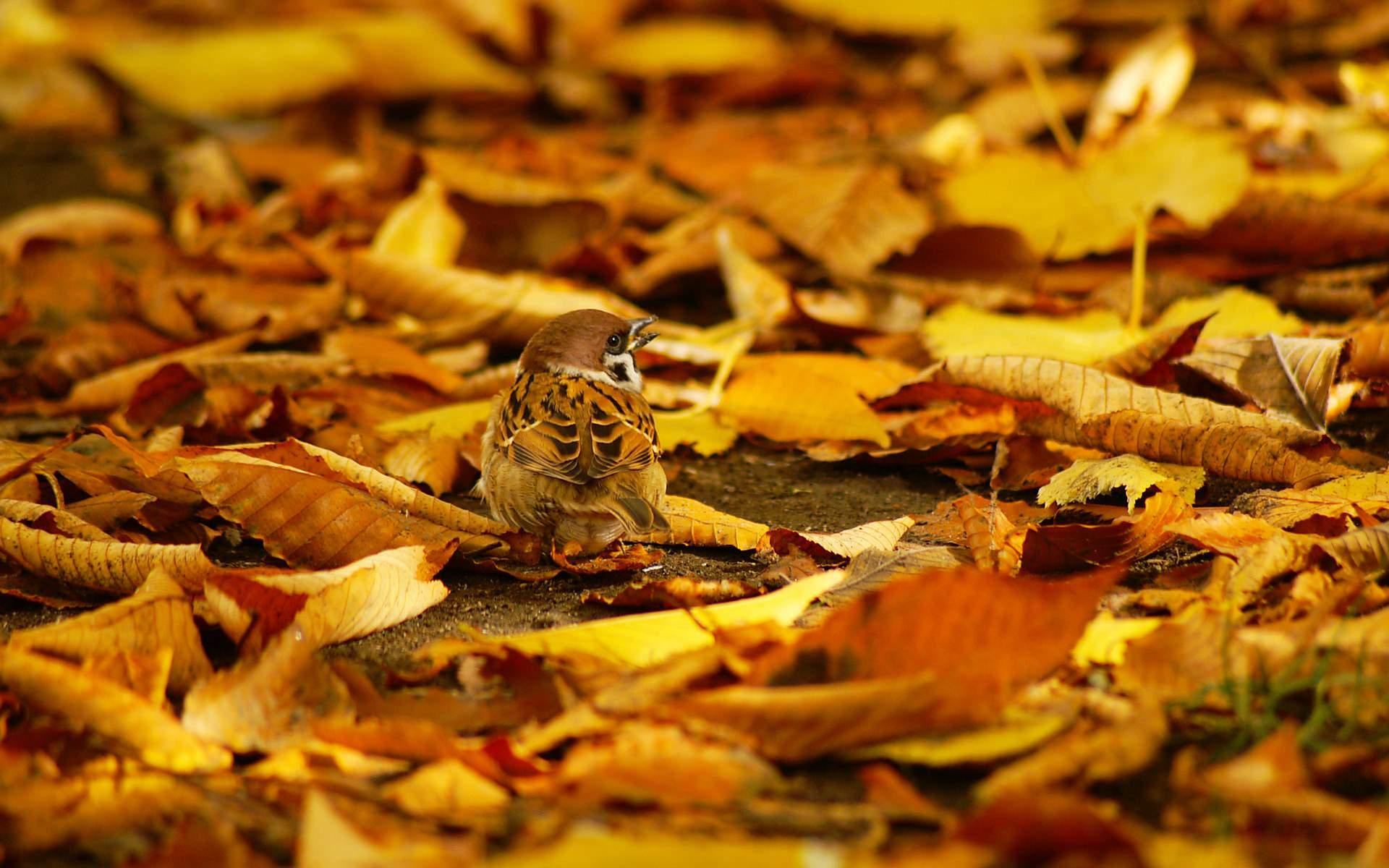 雀の枯葉画像