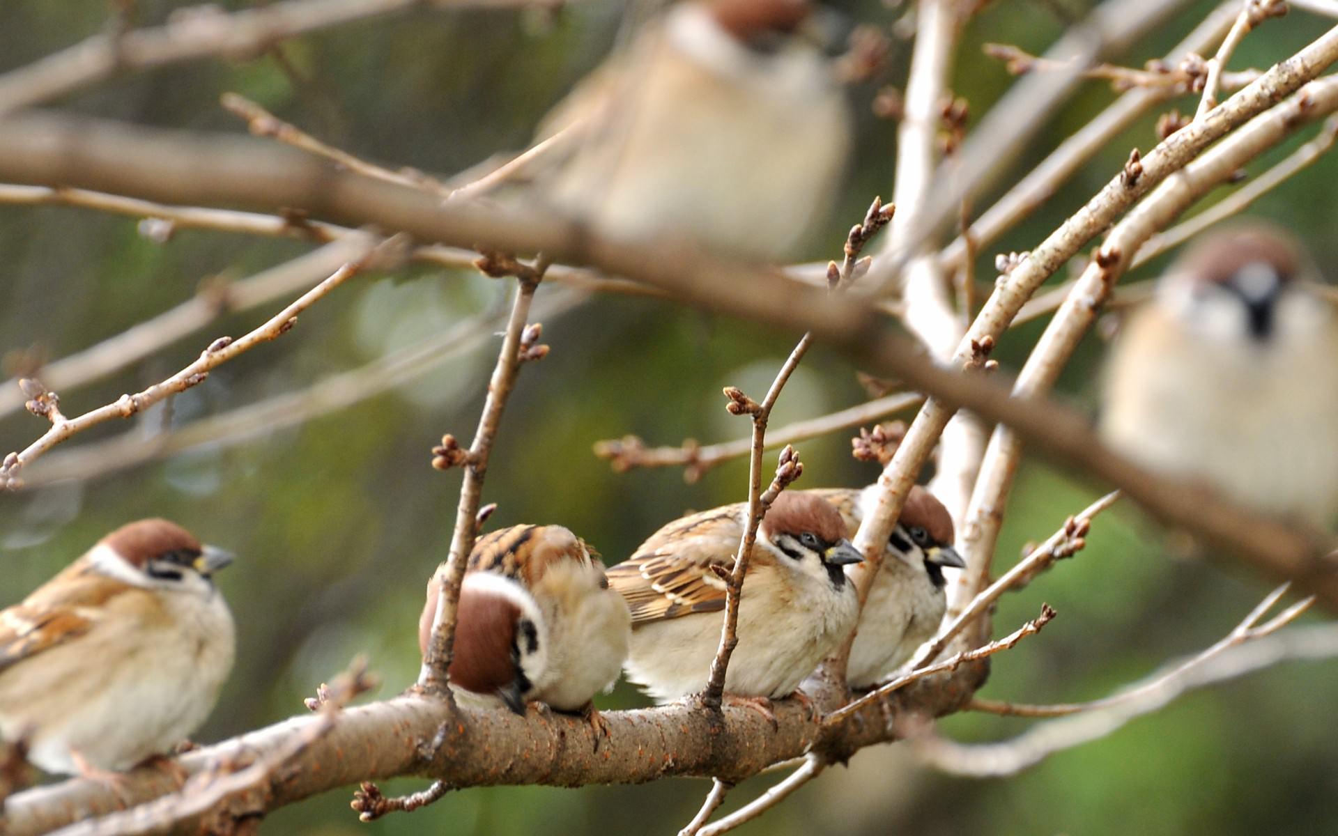 雀のお休み画像