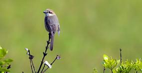 鳥の壁紙#101サムネイル