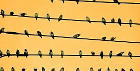 鳥の壁紙#102サムネイル