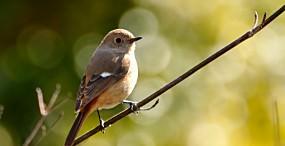 鳥の壁紙#106サムネイル