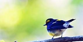 鳥の壁紙#111サムネイル
