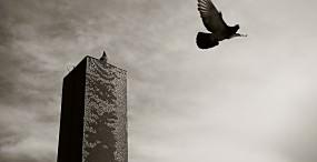 鳥の壁紙#112サムネイル