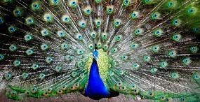 鳥の壁紙#115サムネイル