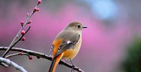 鳥の壁紙#120サムネイル