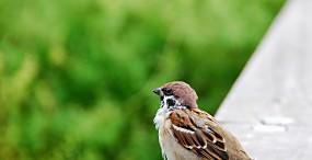 鳥の壁紙#125サムネイル