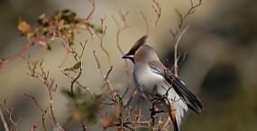 鳥の壁紙#127サムネイル