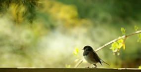 鳥の壁紙#15サムネイル