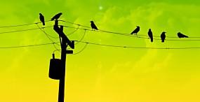 鳥の壁紙#4サムネイル
