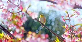 鳥の壁紙#41サムネイル