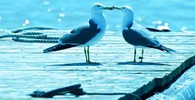 鳥の壁紙#46サムネイル