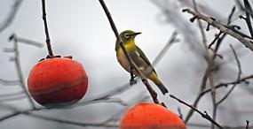 鳥の壁紙#49サムネイル