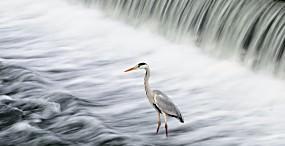 鳥の壁紙#52サムネイル