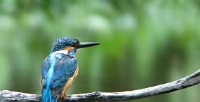 鳥の壁紙#54サムネイル