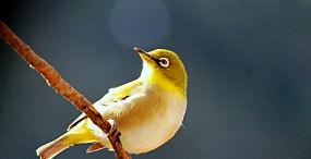 鳥の壁紙#56サムネイル