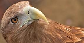鳥の壁紙#57サムネイル