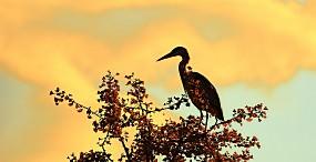 鳥の壁紙#66サムネイル