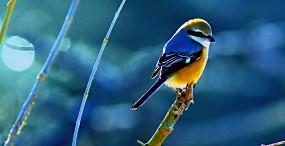 鳥の壁紙#67サムネイル
