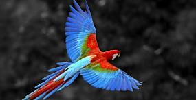 鳥の壁紙#7サムネイル