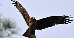 鳥の壁紙#72サムネイル