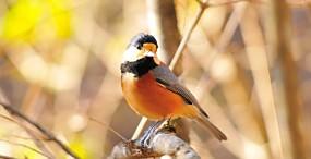 鳥の壁紙#73サムネイル