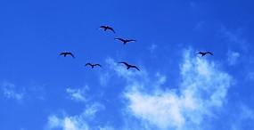 鳥の壁紙#75サムネイル