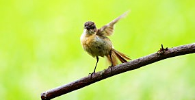 鳥の壁紙#76サムネイル