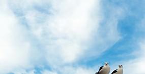 鳥の壁紙#77サムネイル