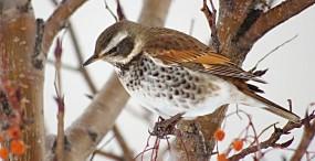 鳥の壁紙#79サムネイル