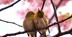 鳥の壁紙#82サムネイル