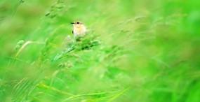 鳥の壁紙#92サムネイル