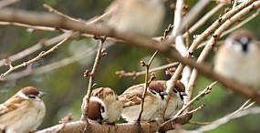 鳥の壁紙#94サムネイル