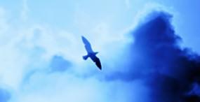 鳥の壁紙#95サムネイル