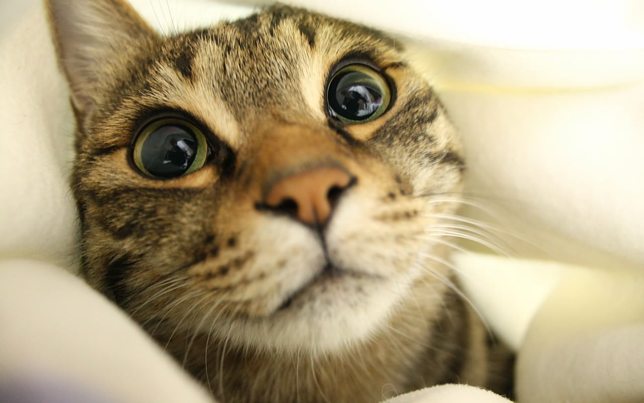 猫の画像 p1_31