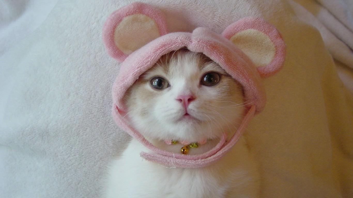 猫の画像 p1_30