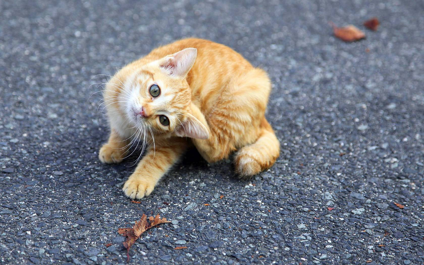 猫の画像 p1_35