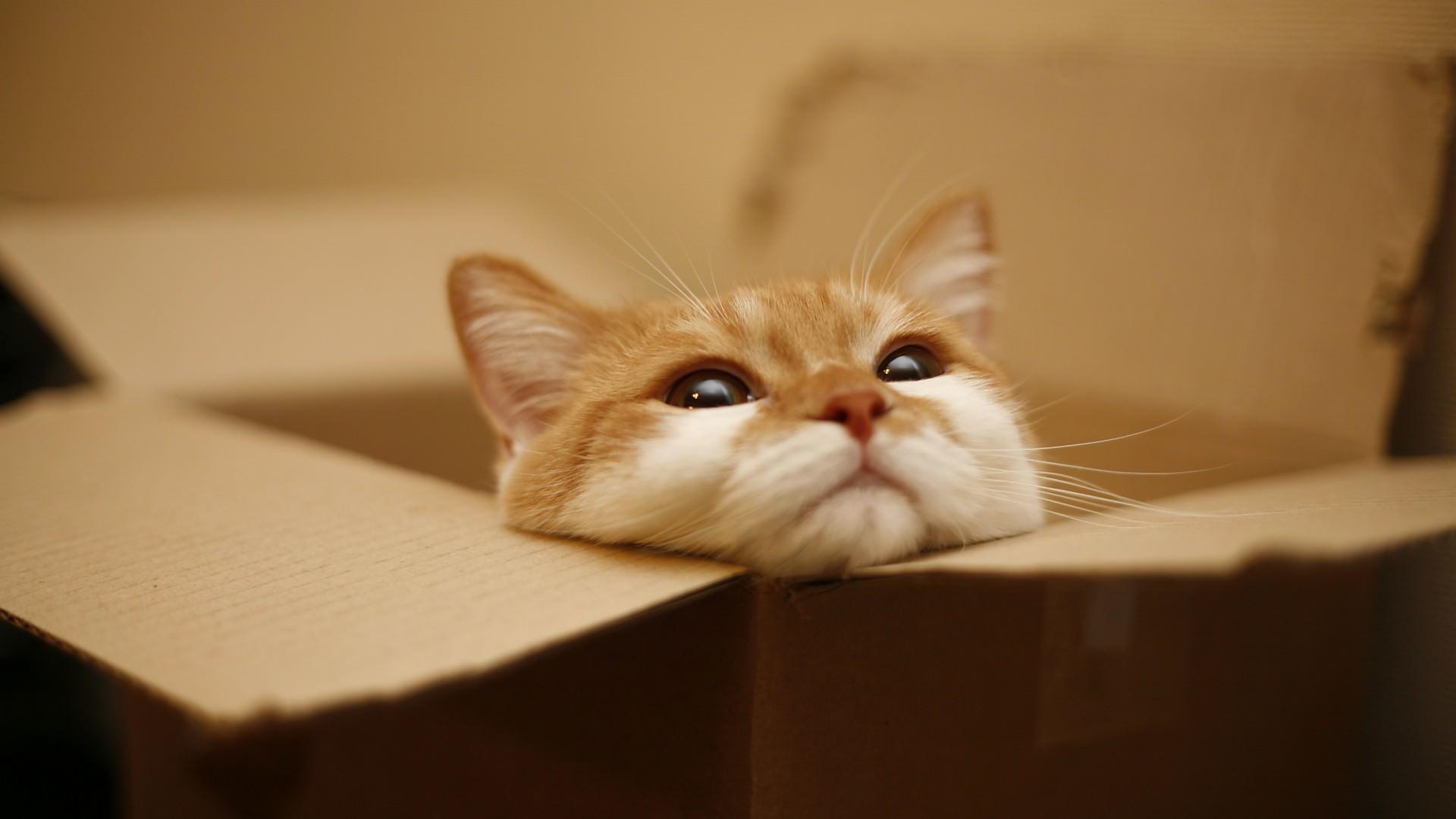 Cat On The Box