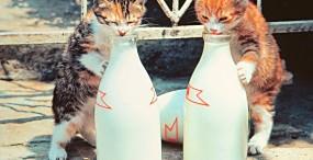 猫の壁紙#1サムネイル