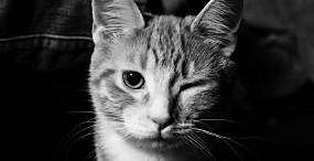 猫の壁紙#10サムネイル