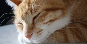 猫の壁紙#66サムネイル