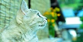 猫の壁紙#67サムネイル