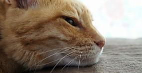 猫の壁紙#72サムネイル