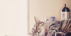 猫の壁紙#77サムネイル