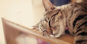猫の壁紙#78サムネイル