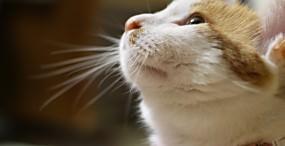 猫の壁紙#81サムネイル