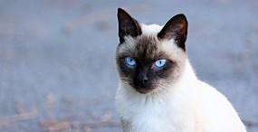 猫の壁紙#82サムネイル