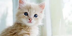猫の壁紙#13サムネイル