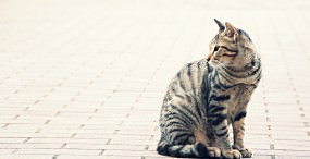 猫の壁紙#89サムネイル