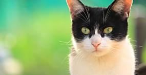 猫の壁紙#90サムネイル